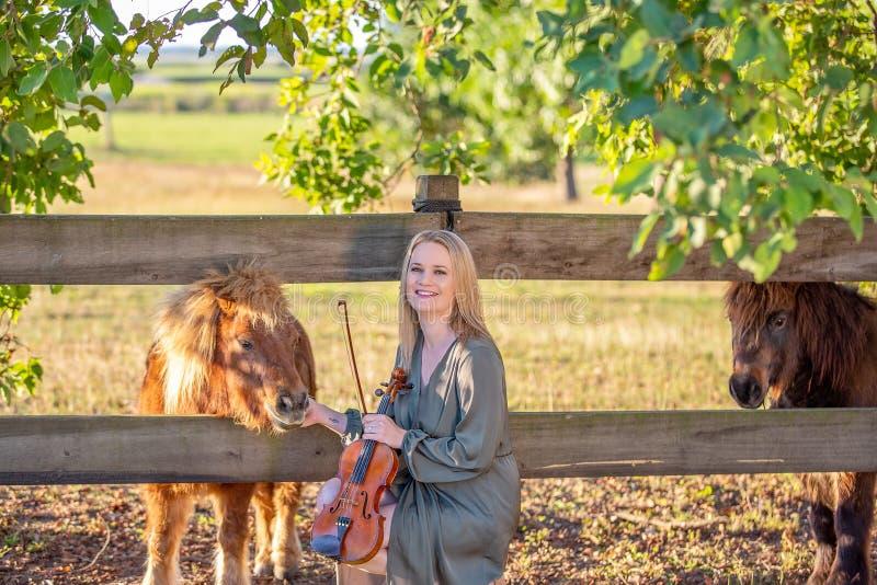 Скрипач соединяясь с миниатюрными лошадями стоковое фото