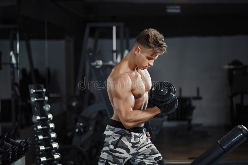 Скручиваемость бицепса тренировки культуриста спортсмена мышечная с гантелью в спортзале стоковое фото rf