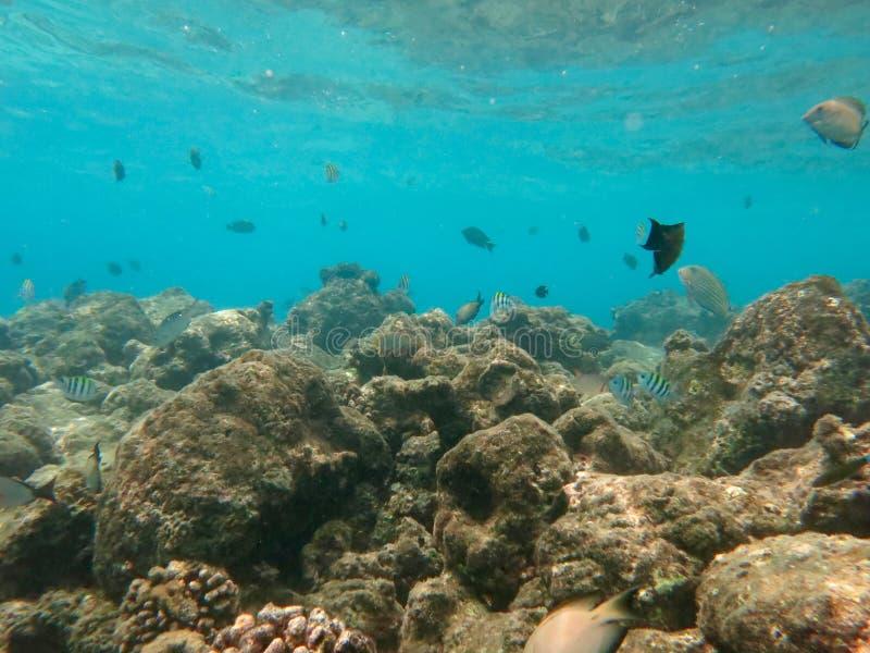 Скуба в Мальдивах стоковые изображения rf