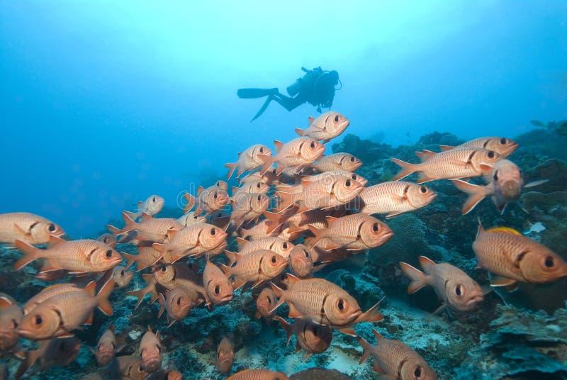 скуба красного цвета рыб водолаза стоковые фото