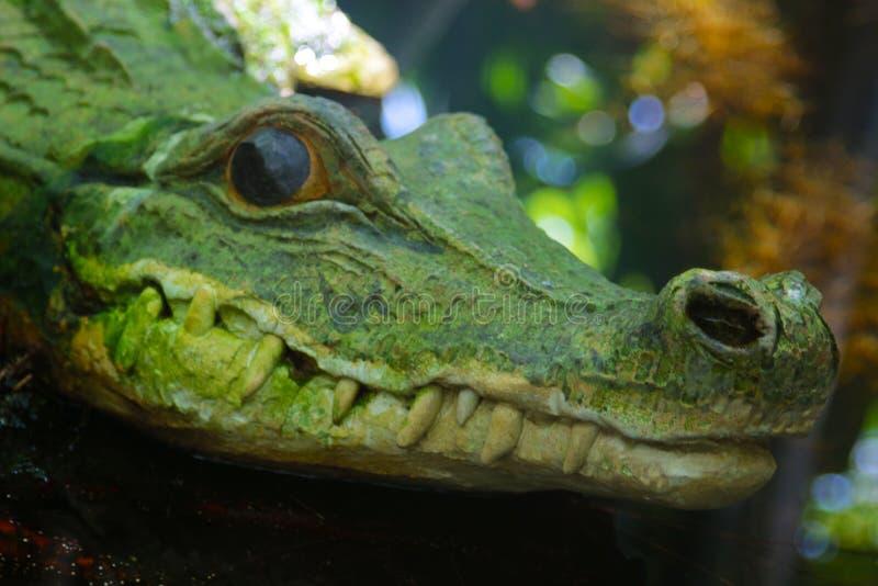 Скульптура крокодила, конец-вверх своей головы стоковое изображение rf