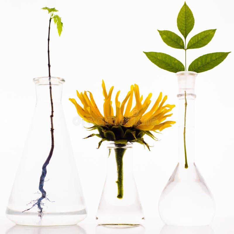 3 склянки лаборатории с заводами на белой предпосылке стоковые изображения