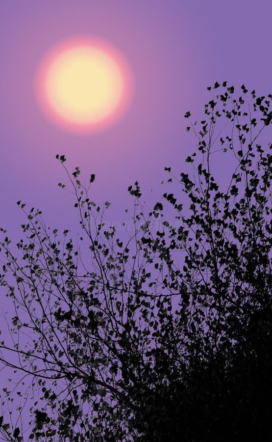 Слабое сумерк с ветвями и листьями стоковое изображение