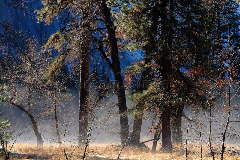 Слава утра в Yosemite стоковые изображения rf