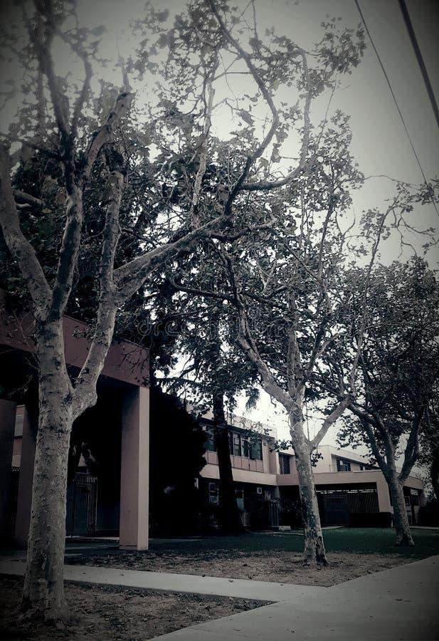 Славное изображение деревьев стоковое фото rf
