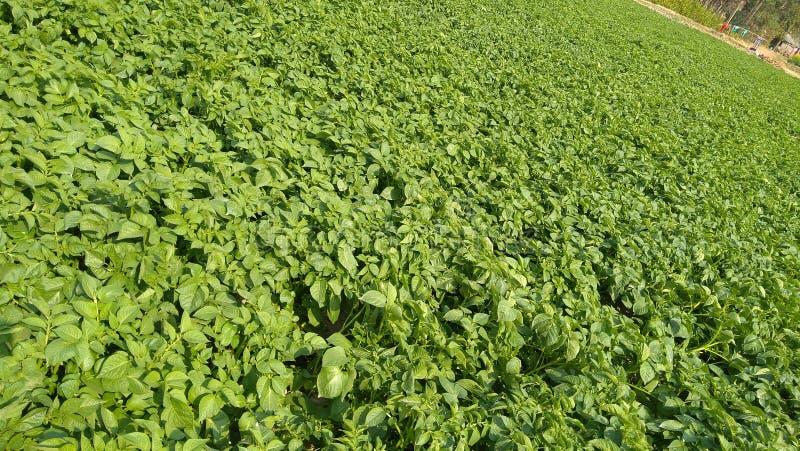 Славные листья зеленого цвета стоковое фото rf