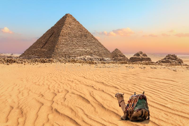 Славный верблюд отдыхая около пирамиды Menkaure в Гизе, Египте стоковая фотография