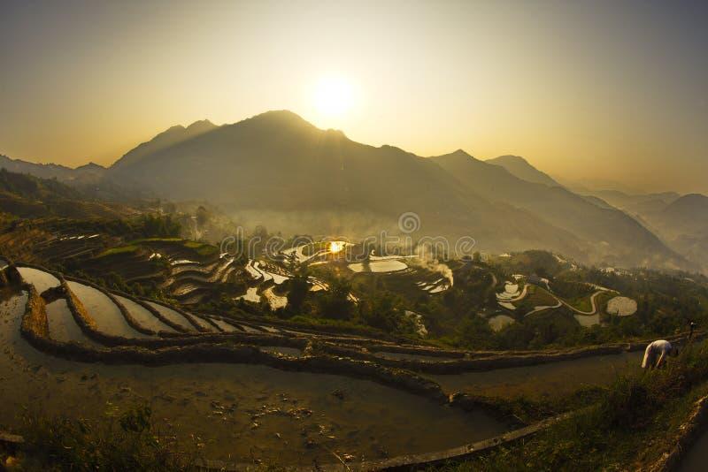 Славный горный пик с террасами риса полными воды на восходе солнца стоковая фотография rf
