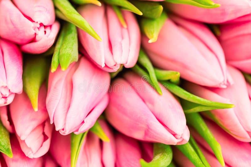 Славный естественный букет от розовых тюльпанов как романтичная предпосылка Селективный фокус близкие розовые тюльпаны вверх Розо стоковое фото rf