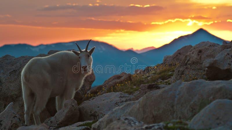 славный заход солнца горы козочки стоковые изображения
