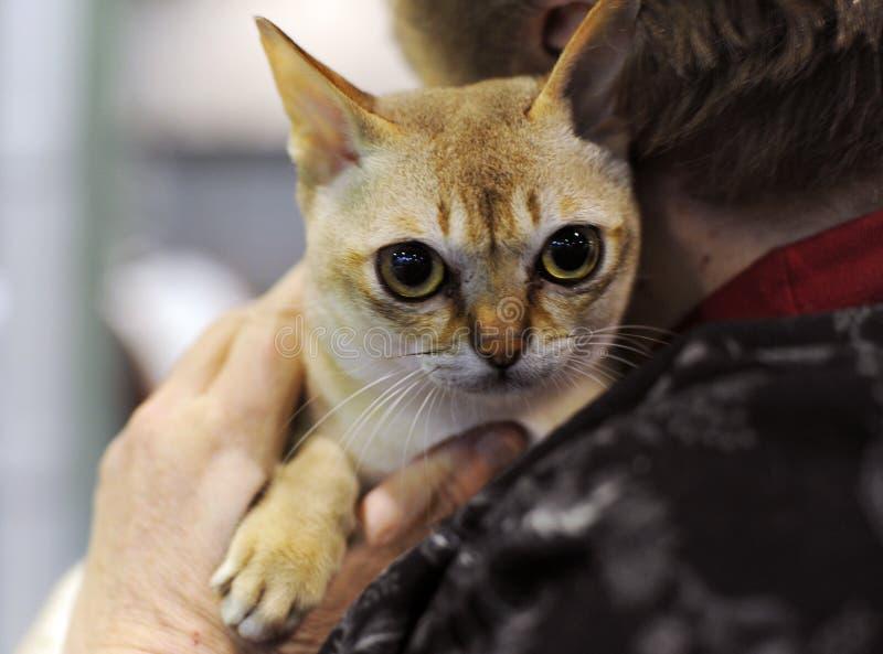 Славный кот на выставке стоковое фото rf