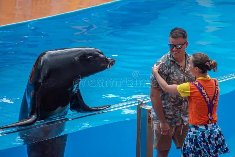 Славный морской лев с тренером и человеком публики в шоу морского льва высоком на Seaworld 36 стоковые изображения rf