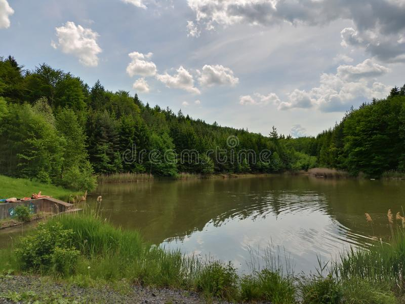 Славный пруд спрятанный в лесе стоковые изображения