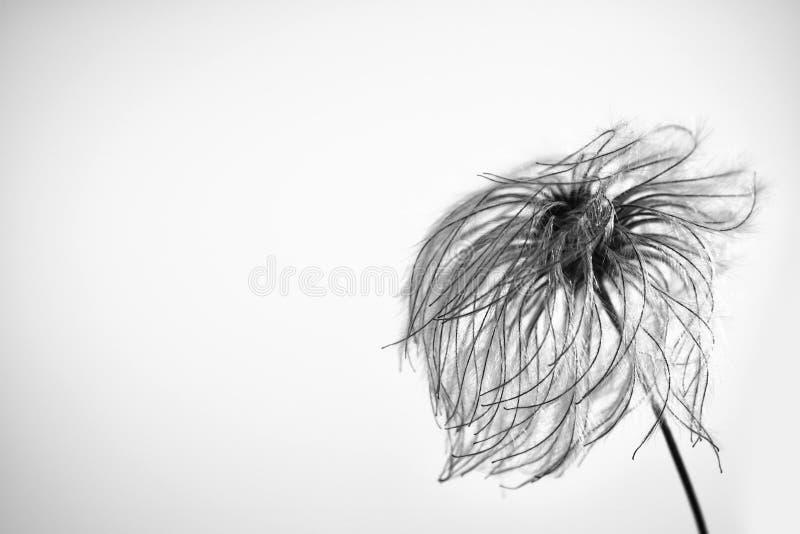 Славный спокойный цветок в ветре стоковое фото rf