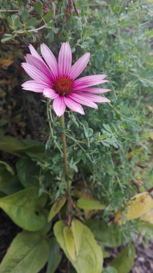 Славный цветок стоковая фотография rf