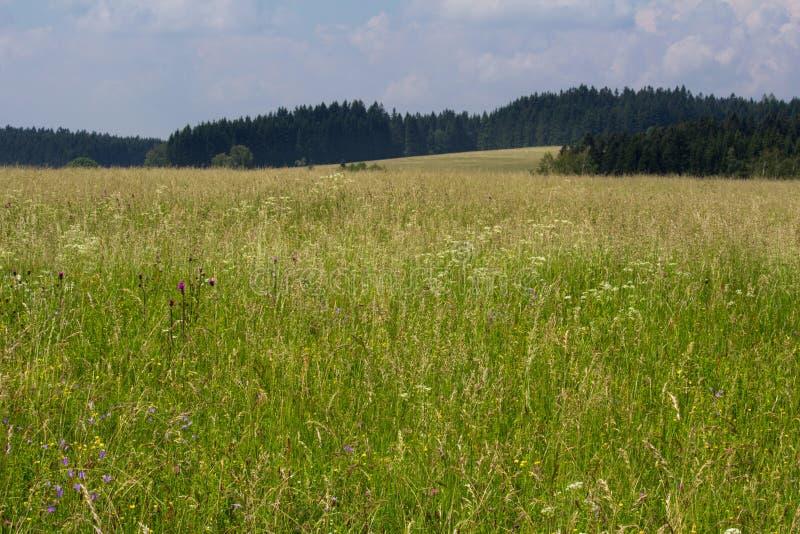 Славный чехословакский ландшафт в горе Novohradske с цветком луга стоковое изображение