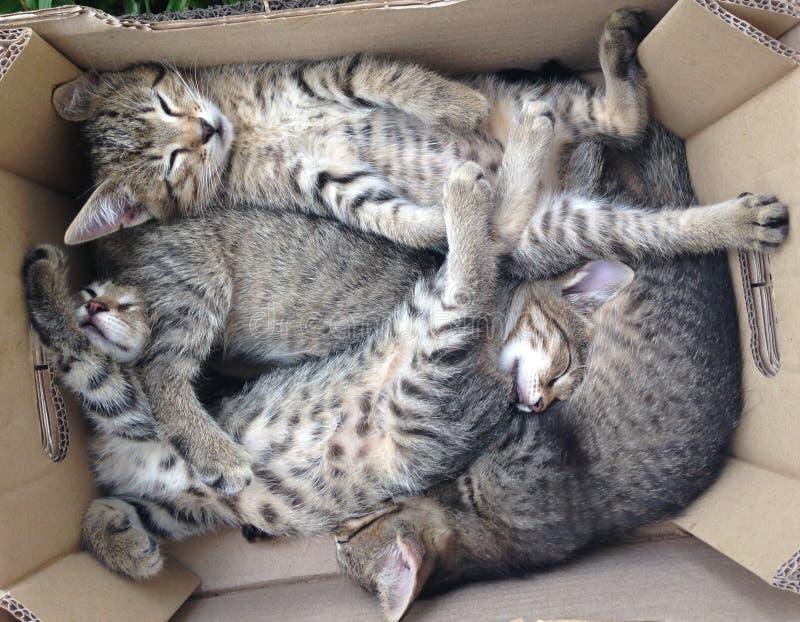 4 славных красивых котят стоковое изображение rf