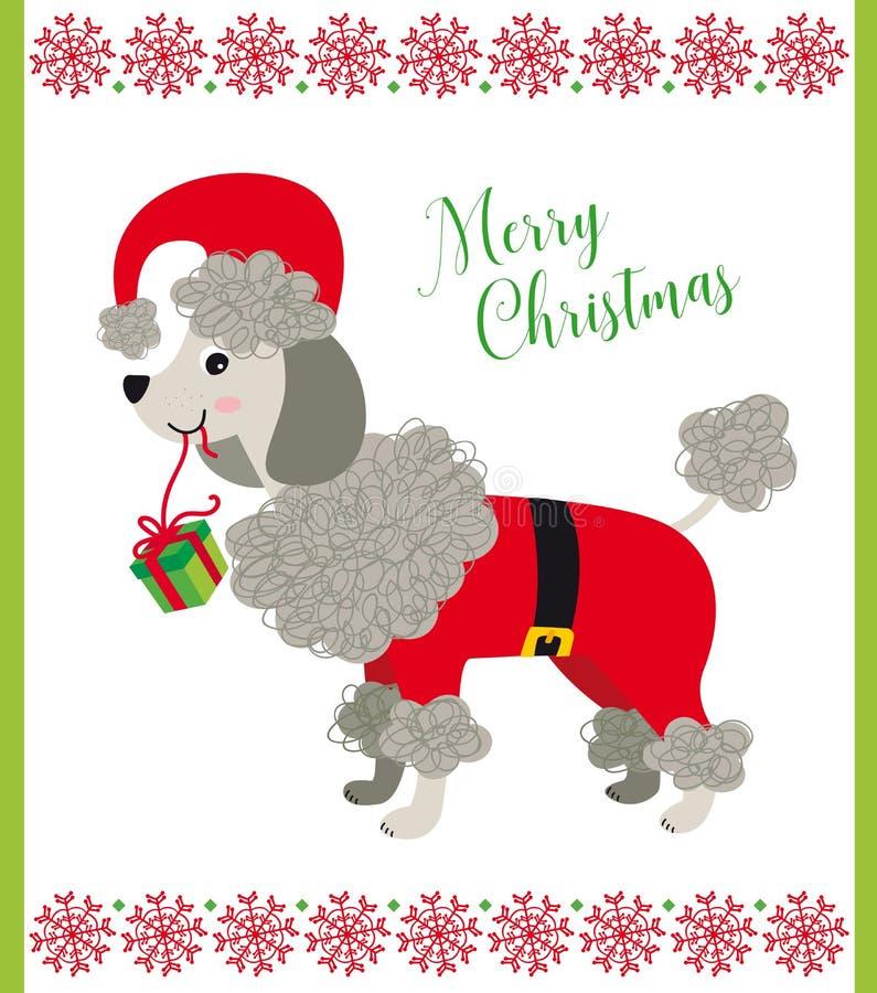 Сладкая собака пуделя с костюмом Санта стоковое изображение rf