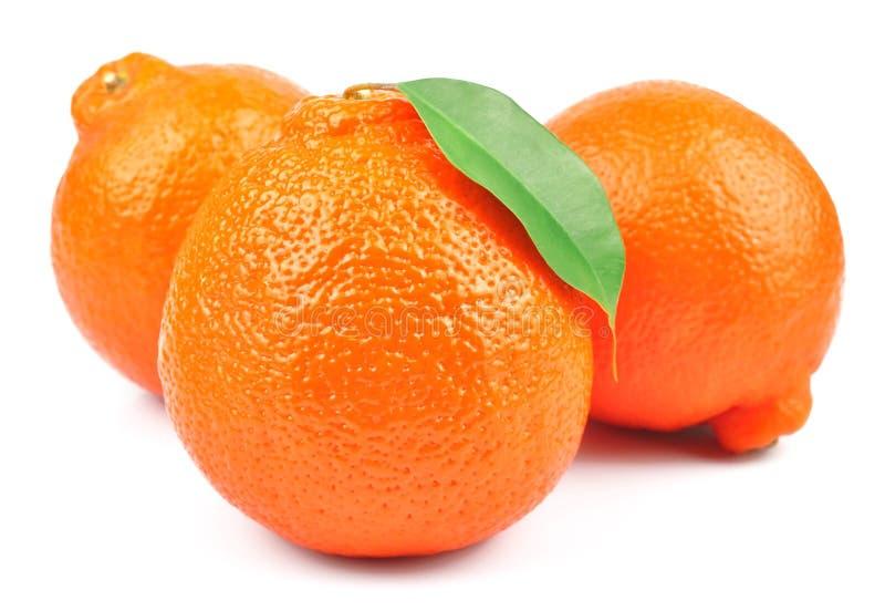 Сладкие апельсины fruits (minneola) стоковое изображение