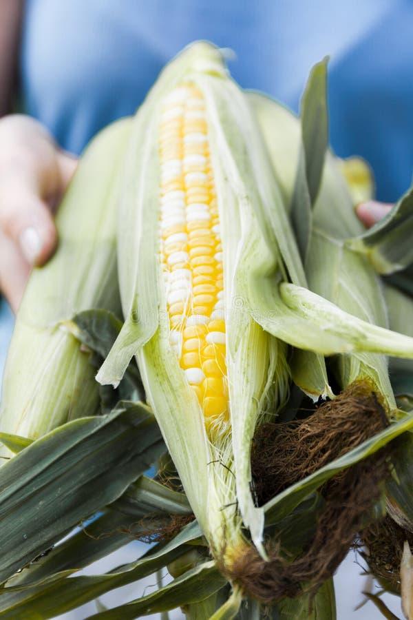 Сладкий удар маиса, попкорн земледелия Био натуральные продукты стоковые фотографии rf