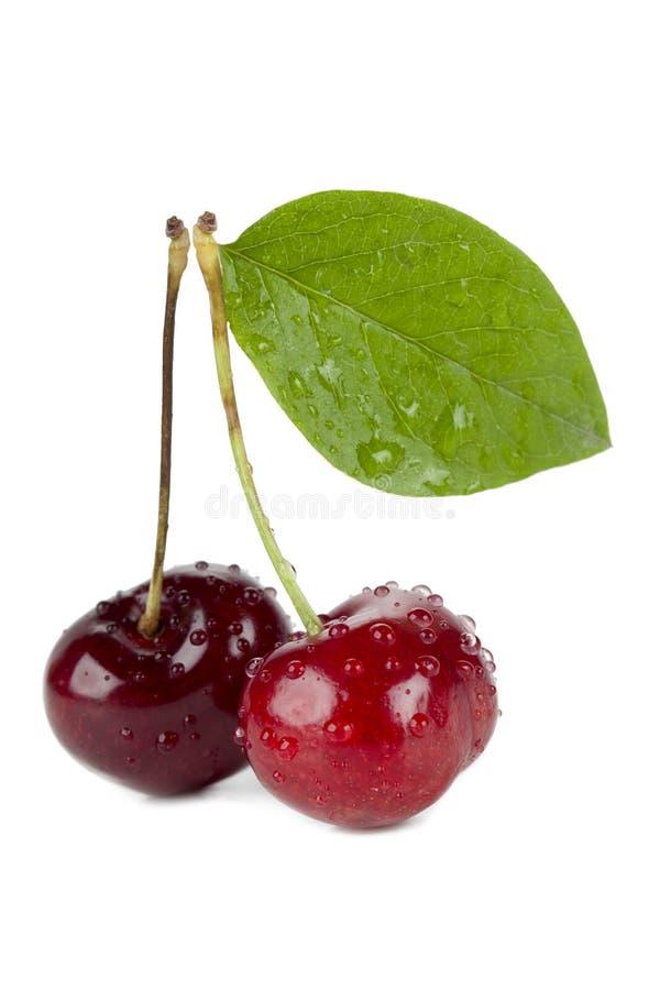 Сладостные вишни стоковое изображение