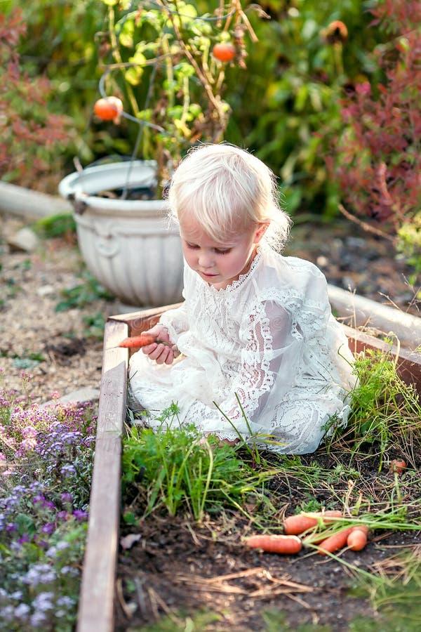 Сладостные моркови рудоразборки ребенка маленькой девочки от сада стоковое изображение rf