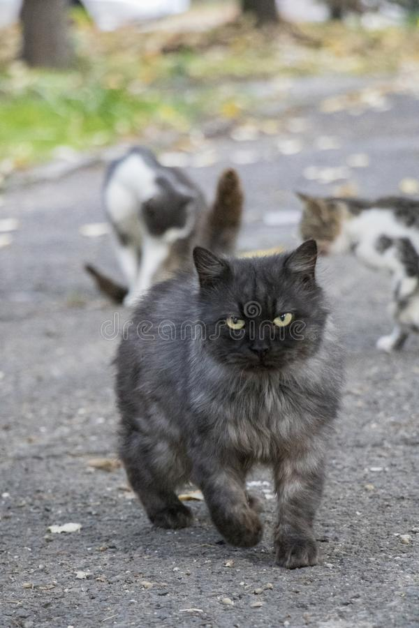 Сладостный голодный кот стоковые изображения rf