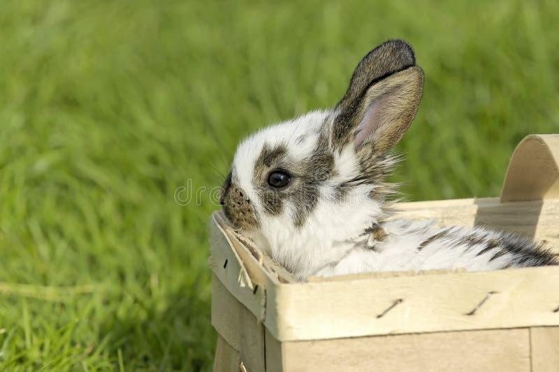 Сладостный зайчик пасхи в коробке стоковая фотография rf