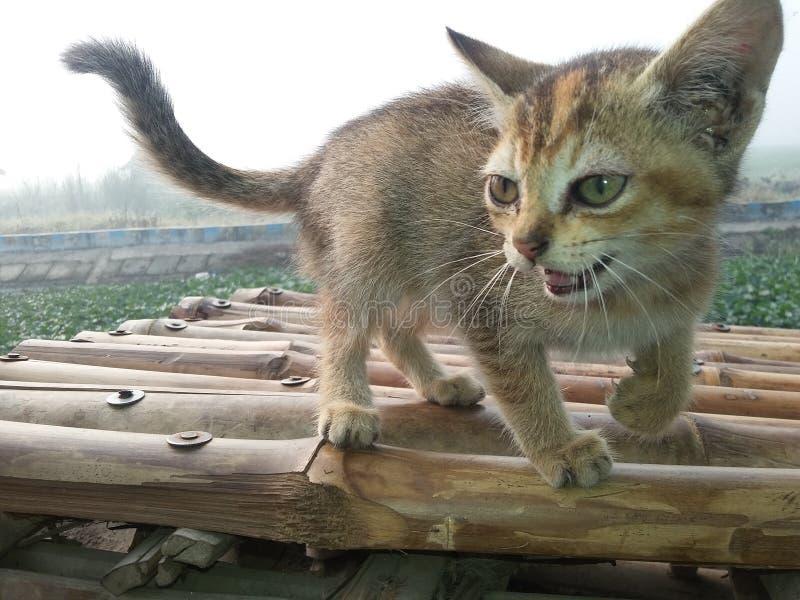 Сладостный кот младенца стоковое изображение