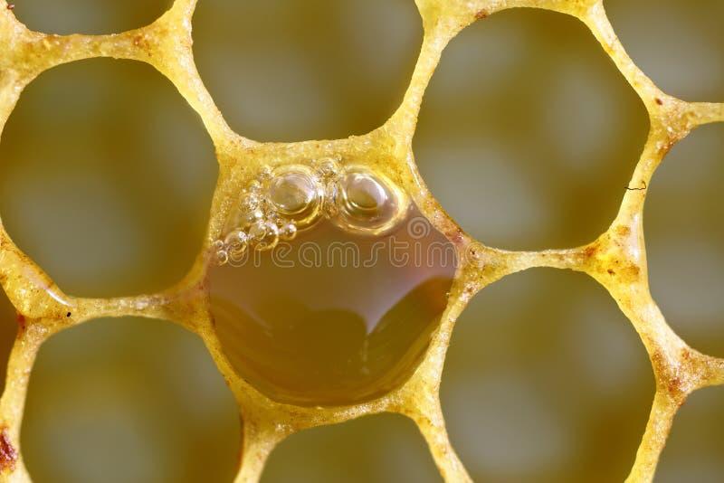 Сладостный свежий мед в загерметизированной рамке гребня стоковое изображение