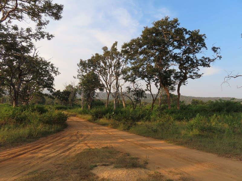Следы в Bandipur стоковое фото