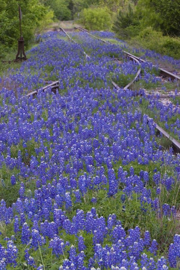 следы железной дороги bluebonnets стоковая фотография