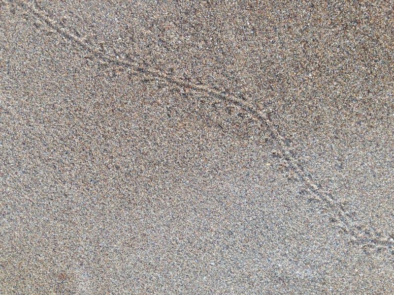 Следы краба на пляже стоковое изображение rf
