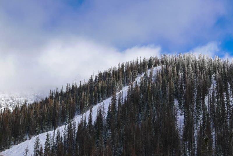 Следы лыжи на горе монарха стоковая фотография
