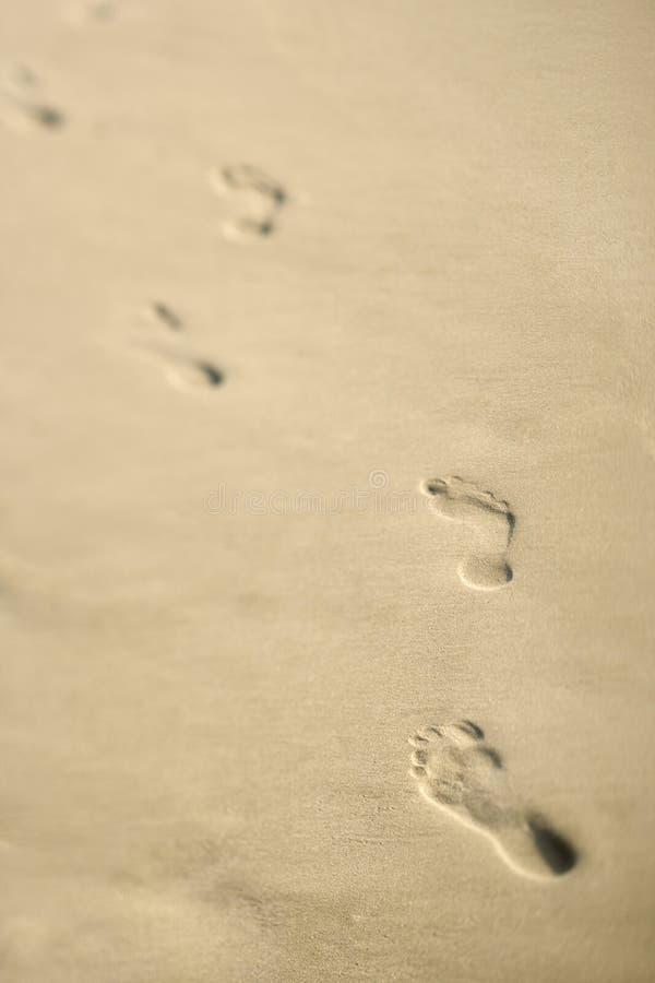 следы ноги береговой линии стоковая фотография