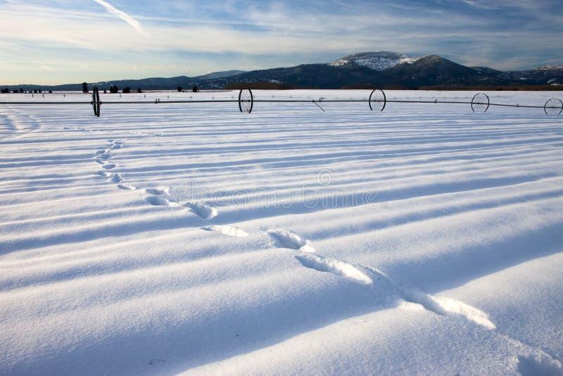Следы ноги в снежке. стоковое фото