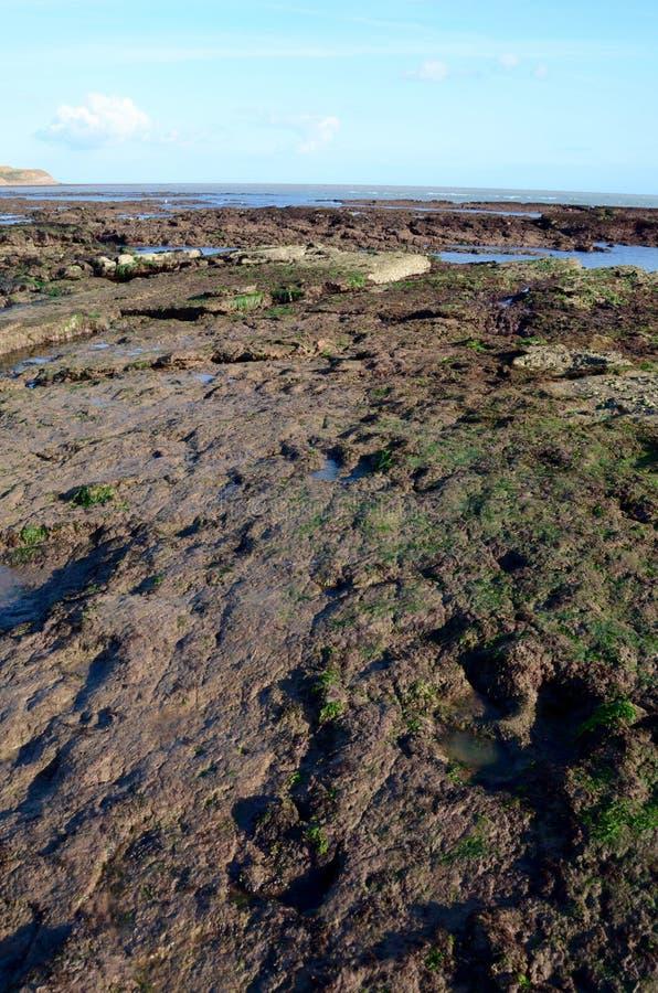 Следы ноги динозавра, пляж Compton, остров Уайт стоковые фото