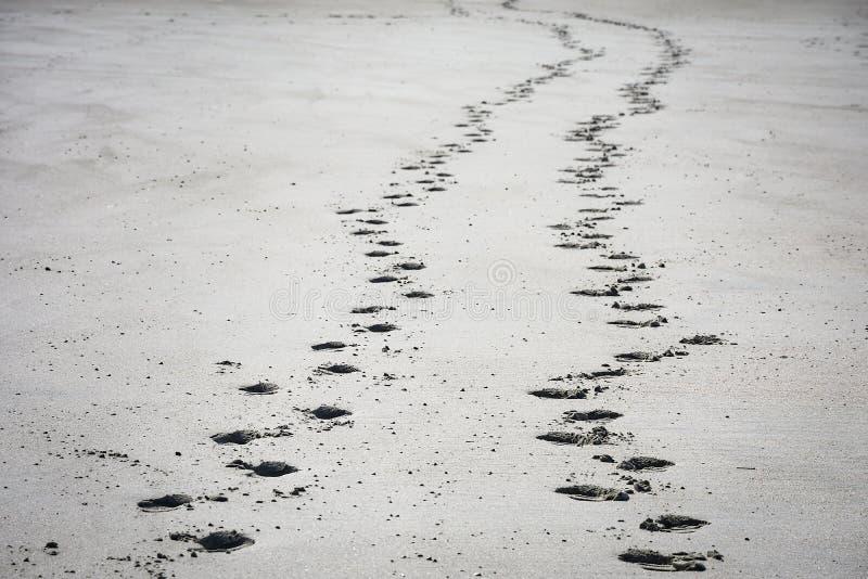 Следы ноги на песчаном пляже стоковое фото