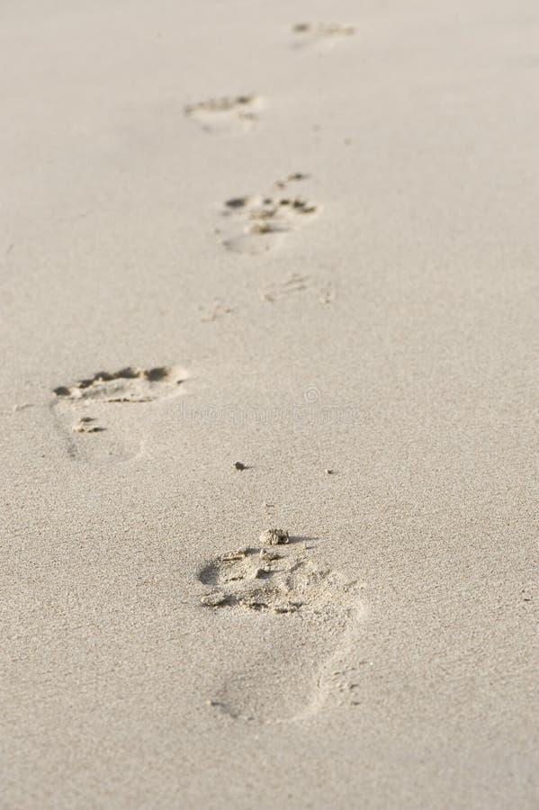 Следы ноги на пляже стоковое фото rf