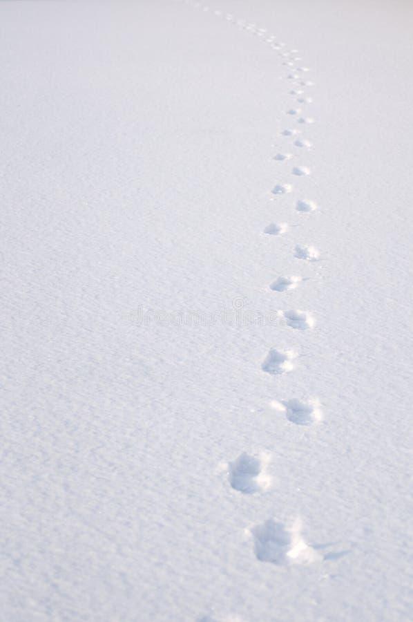 Следы ноги снежка стоковое фото