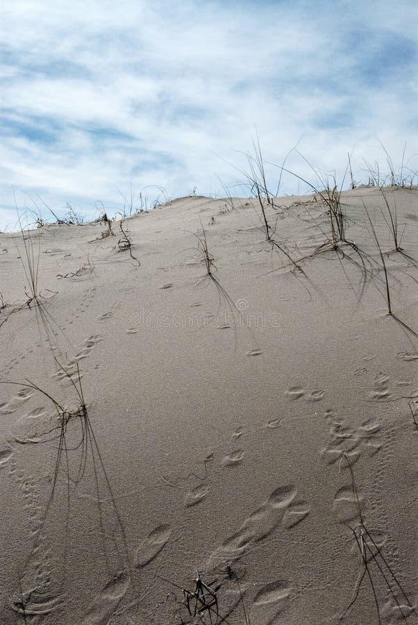Следы песчанной дюны ландшафта пустыни животные стоковое изображение rf