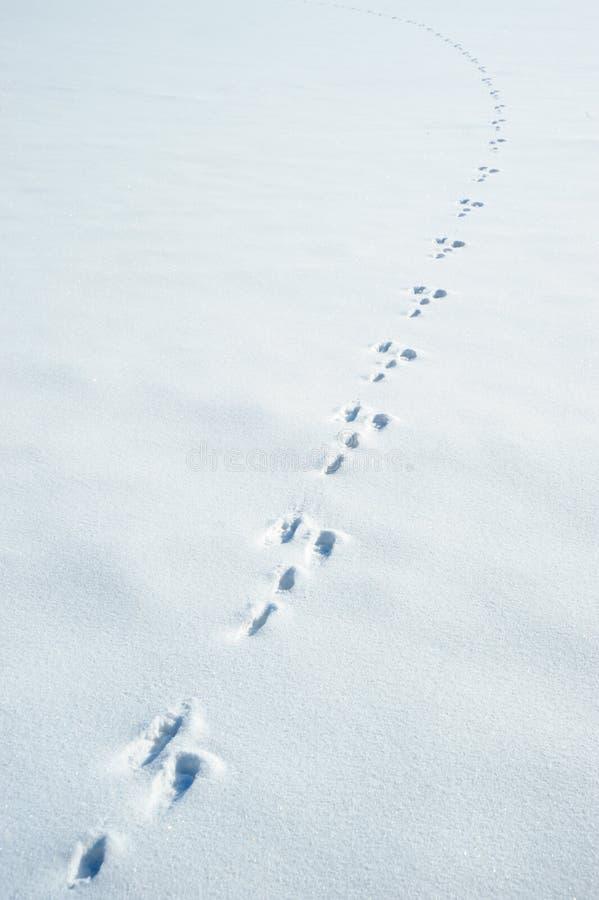 следы снежка зайцев стоковое изображение