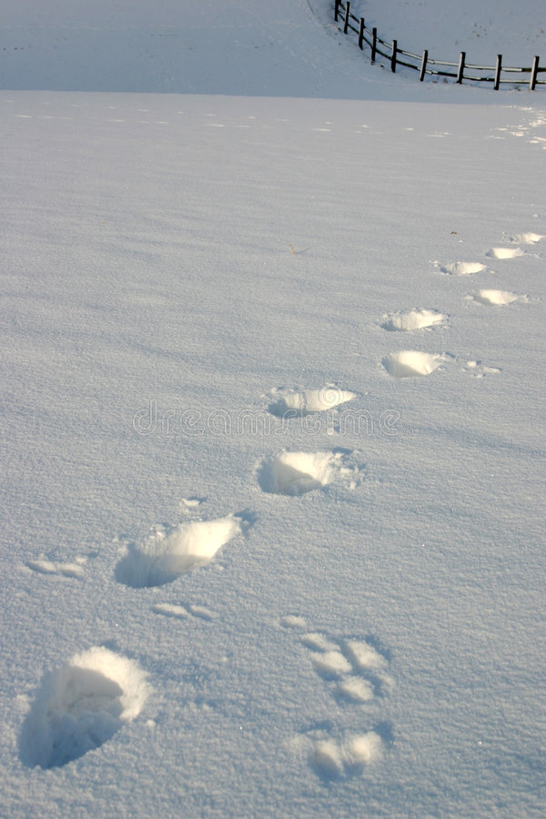 следы снежка стоковое изображение rf