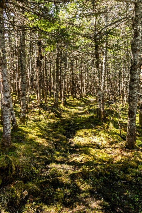 Следы через лес и вдоль променадов вокруг Berryh стоковая фотография