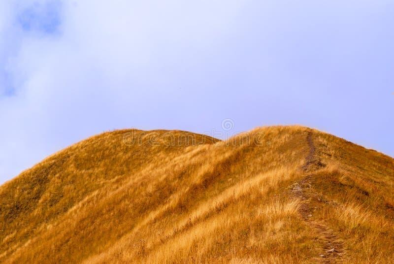 След водя к верхней части холма стоковая фотография rf