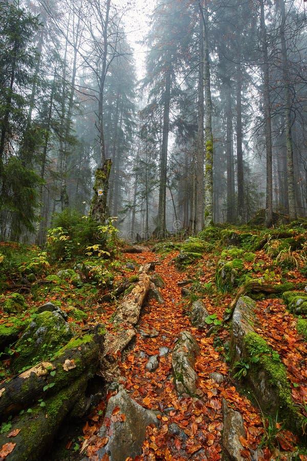 След в сочном лесе стоковое изображение