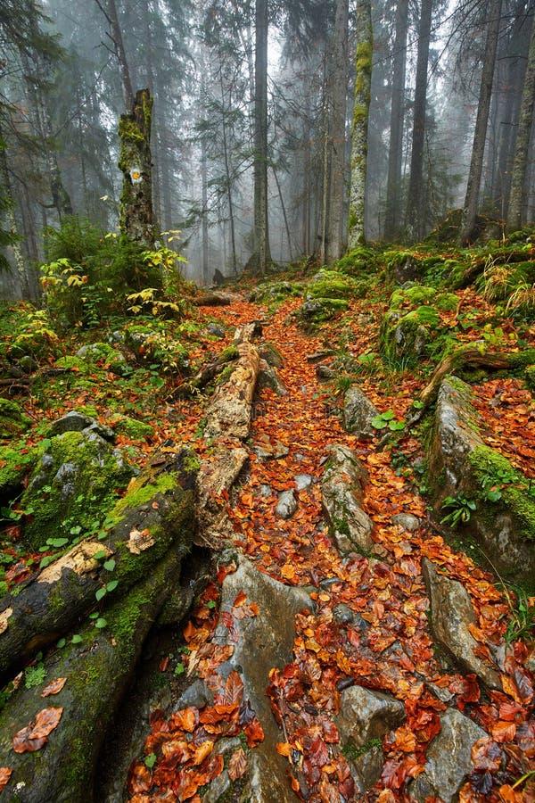 След в сочном лесе стоковые изображения rf