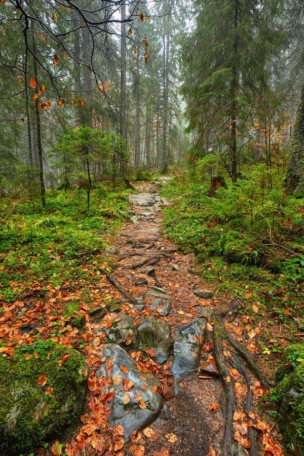 След в сочном лесе стоковые фото