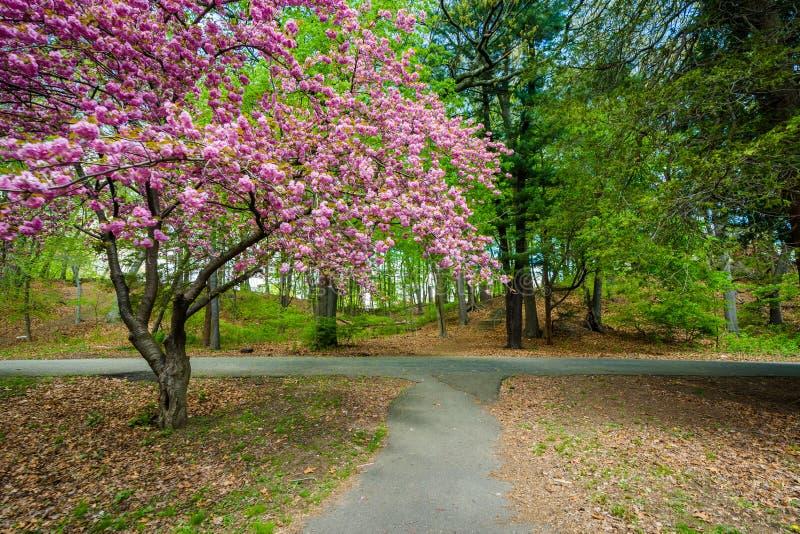 След и деревья на парке Edgewood в New Haven, Коннектикуте стоковые фотографии rf