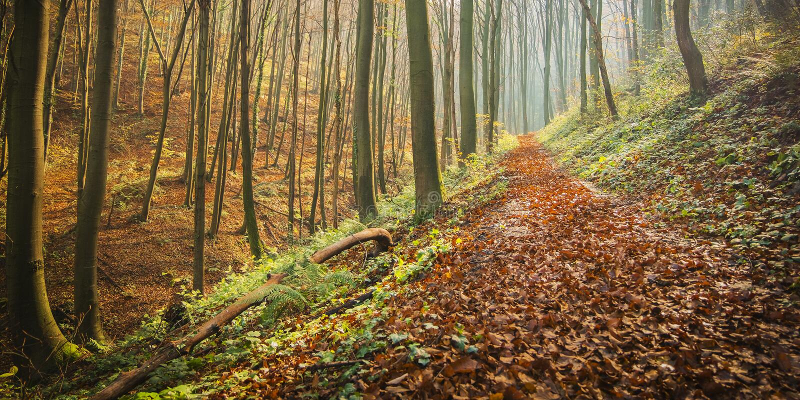 След леса покрытый с листьями осени стоковое фото rf